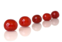 sura Cherry Arkivbilder