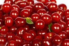 sura Cherry Royaltyfri Foto
