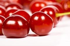 sura Cherry Arkivbild