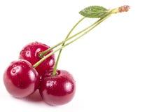 Sura Cherry på white Arkivbild