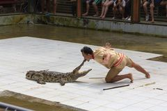 SURAT THANI PROVINCE, THAILAND, FEBRUARY 12: The crocodile show Stock Images