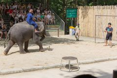 SURAT THANI PROVINCE, THAILAND, FEBRUARY 12: The elephant show a Royalty Free Stock Photos
