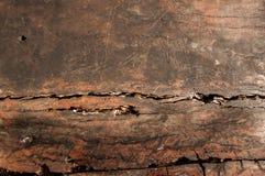 Surco de madera de la textura de la madera Fotografía de archivo libre de regalías