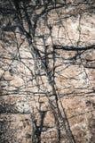 Surco del detalle de la textura en la piedra caliza vieja Fotografía de archivo