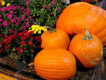 Sure signs of fall - pumpkins and flowers. Pumpkins of varying sizes and shapes and an assortment of flowers, purple, red and yellow, in a local market Royalty Free Stock Images