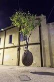 Sureal-Baum im Ei lizenzfreie stockfotos