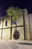 Sureal tree in egg. Shot in the middle  of the spring night, Old Jaffa, Tel Aviv Royalty Free Stock Photos