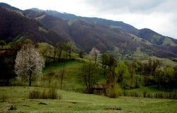 Sureanu Mountains Royalty Free Stock Image