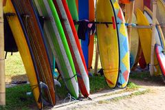 Surf board Stock Image