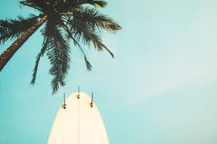 Surf board with palm tree in summer season Royalty Free Stock Photography