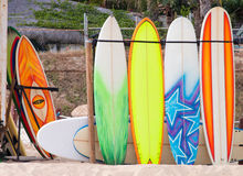 Surf board rental. Surf boards lined up at the beach for rental Royalty Free Stock Image