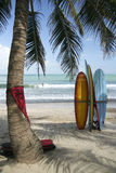 surf boards palm tree kuta beach bali indonesia stock photo