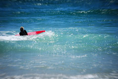 Surf Girl. Girl surfing at the beach Stock Image