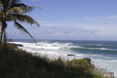 Surf,Northshore Seascape. Rugged storm surf battered coast of Oahu, with palm tree swaying on a Sunny Day Stock Photos