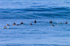 Surf Riders Waiting Swells. Surf riders sitting on their surfboards in the calm ocean waiting to catch and ride or surf the waves Royalty Free Stock Photos