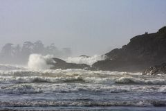 Storm watching in Cox Bay in Tofino, BC. Surf`s up in Cox Bay with large pounding waves great for surfing in Tofino, BC royalty free stock images