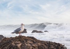 Surf and Seagull Royalty Free Stock Image