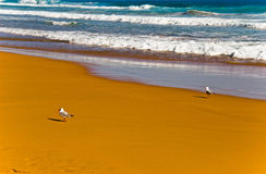 Surf with seagulls Stock Photography