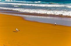 Surf with seagulls. On sandy beach Stock Photography