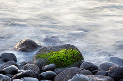 Surf and seaweed on a rock Royalty Free Stock Photos