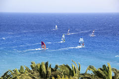 surfa Royaltyfri Foto