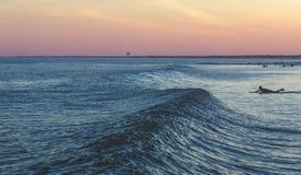 Surfa vid solnedgång Royaltyfri Foto