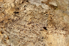 Surface. Of a dead tree, battered by the weather and other elements Royalty Free Stock Photo