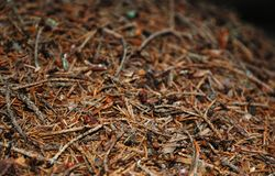 Surface of the anthill Royalty Free Stock Image