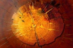 Surface or background/texture of big old Log teak. For background vector illustration