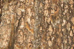 The surface of the bark of a tree Royalty Free Stock Photos