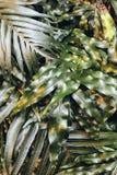 Surface brillante posée de feuillage en détail photographie stock libre de droits