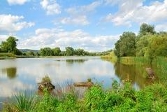 Surface calme d'étang entourée par des saules Photos libres de droits