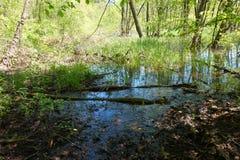 Surface calme de l'eau d'un courant ou d'un étang marécageux dans la forêt Photographie stock