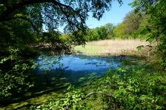 Surface calme de l'eau d'un lac ou d'un étang marécageux dans la forêt Images libres de droits