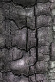 Surface of charcoal. Texture of the charred wood Stock Photos