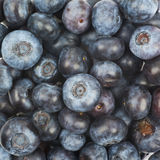 Surface coated with bilberries. Surface coated with the multiple ripe bilberries as a backdrop texture composition Royalty Free Stock Photography