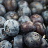 Surface coated with bilberries. Surface coated with the multiple ripe bilberries as a backdrop texture composition Stock Image