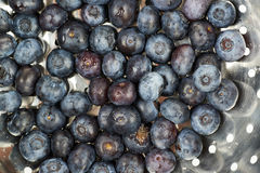 Surface coated with bilberries. Surface coated with the multiple ripe bilberries as a backdrop texture composition Royalty Free Stock Photo