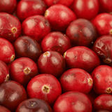 Surface coated with the cranberries Stock Photo