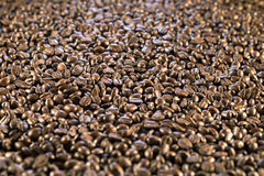 Surface covered with coffee beans as a background. Surface covered with the roasted coffee beans as a background Royalty Free Stock Image