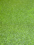 The surface is covered with green duckweed. Royalty Free Stock Image