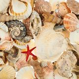 Surface covered with multiple shells Royalty Free Stock Photos