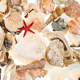 Surface covered with multiple shells Stock Images