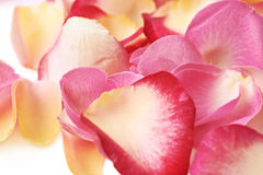 Surface covered with rose petals Royalty Free Stock Photos