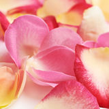 Surface covered with rose petals Stock Image