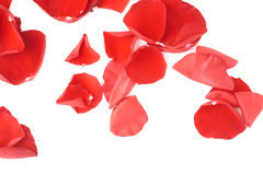 Surface covered with rose petals royalty free stock images