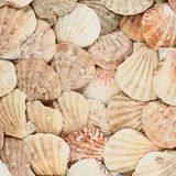 Surface covered with shells Royalty Free Stock Photography