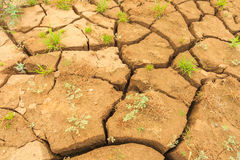 Surface crack of  soil in arid area Royalty Free Stock Photography