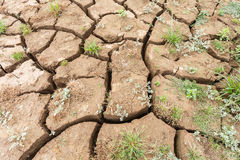 Surface crack of soil in arid area Royalty Free Stock Photo