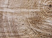 Surface of a cut tree trunk Royalty Free Stock Images